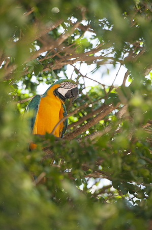 macaw perched in a tropical tree Фото со стока