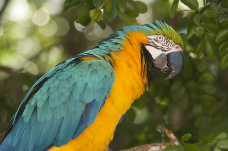Macaw profile close up Stock fotó