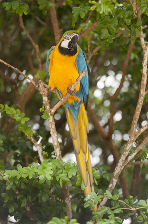 Macaw perched on a tropical tree branch Stock fotó