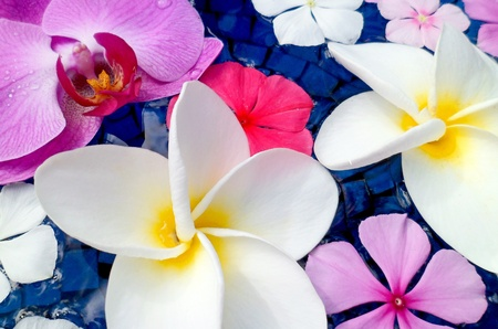 Close-up of tropical flowers  plumeria, vinca, orchid  floating in a deep blue tiled bird bath