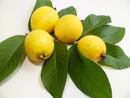 guava: Guava fruits from Hawaii with green leaves on white background