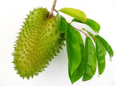A tropical soursop fruit with green leaves on white background