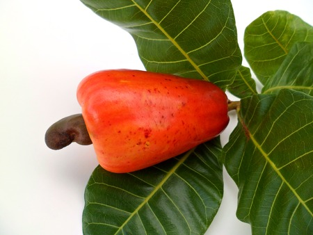 Cashew apples with green leaves on white background