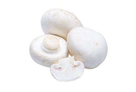isolated mushrooms on the white background