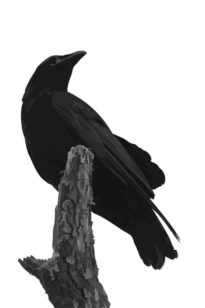 perching: Perched Crow