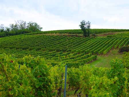 Grey clouds passing on vineyards