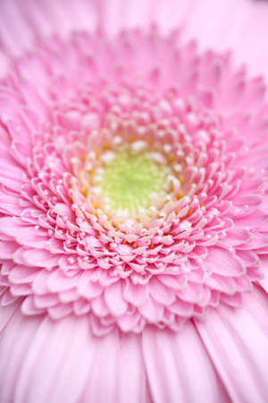 pink flower, closeup of screen saver for your computer