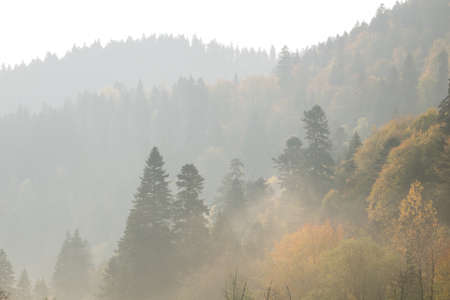 first rays of the sun. Dawn in the mountains. Autumn landscape, yellow trees. Defoliation.