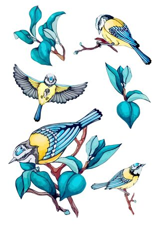 Collection vector stock illustration of blue bird, tit fly, branch, navy blue leaves in vintage, watercolor style isolated background. Set design elements for spring holliday, festival, greeting card.