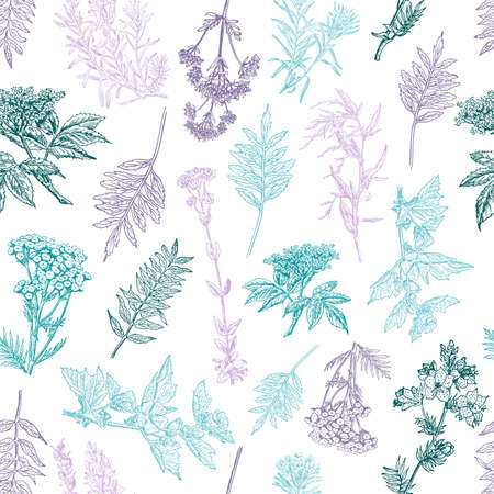 Herbal seamless pattern. Medical forest plants. Background design for cosmetics, store, beauty salon, natural and organic products. Can be used like a texture and fabric print. Vector illustration. Ilustração