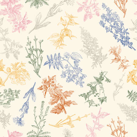 Herbal seamless pattern. Medical forest vintage plants. Herbs design for cosmetics, store, beauty salon, natural and organic products. Can be used like a texture and fabric print. Vector illustration.