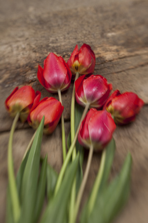 Nosegay of tulips on vintage wooden surface background. Creative selective focusing aplied. Stock Photo