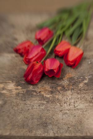 Nosegay of tulips on vintage wooden surface background. Creative defocusing aplied. 版權商用圖片