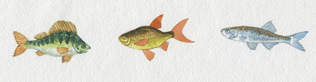 crucian: Three kinds of fishes Stock Photo