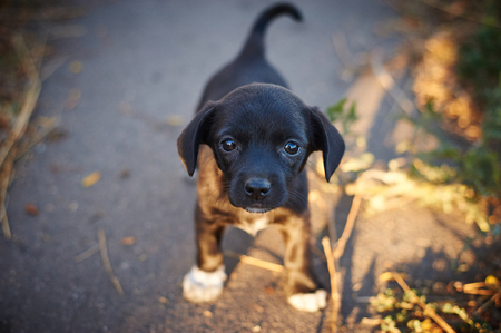 Beautiful black abandoned puppy looking at the camera