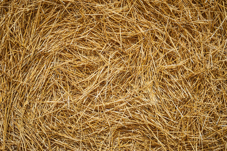 Dry golden yellow straw grass background texture after havesting. Close up Stock Photo