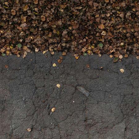 Asphalt with dry yellow leaves