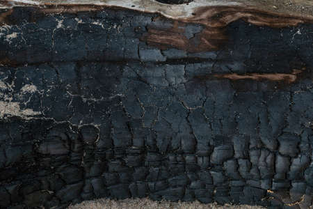 Burnt wood with sand texture