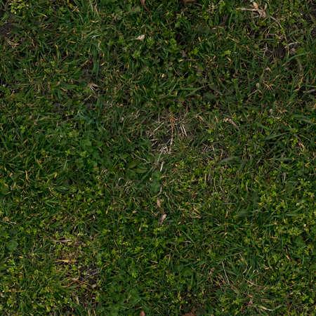 Seamless grassy forest ground texture