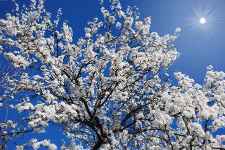 青い空を背景に開花ツリー