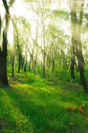 春の森で太陽光線