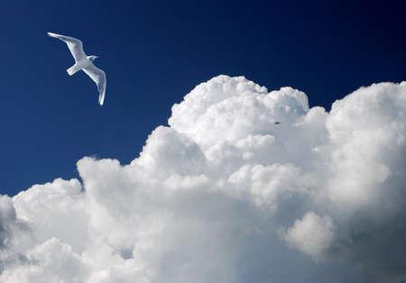 曇り空と空飛ぶカモメ