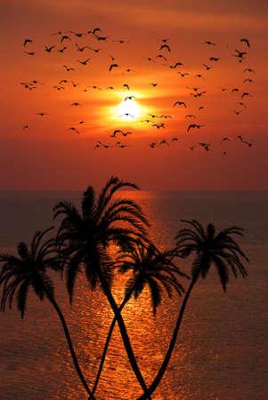 大きなヤシ W 熱帯日没の上