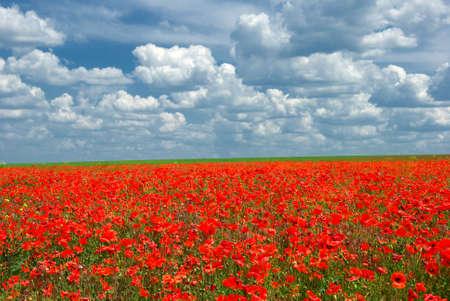 曇った青空にケシの草原