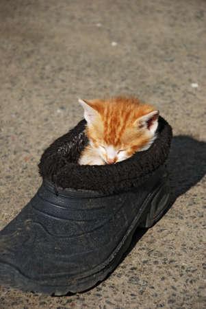 古い靴で面白い猫の睡眠 写真素材