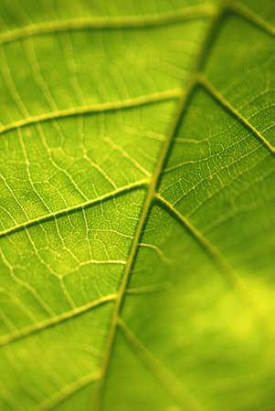 緑の葉を閉じるマクロ