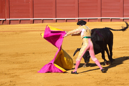 Bullfight photo