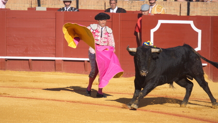animal cruelty: Seville - May 16: Spanish torero is performing a bullfight at the bullfight arena on May 16, 2010 in Seville Spain. Corrida bullfighting of bulls is Spanish tradition. Editorial