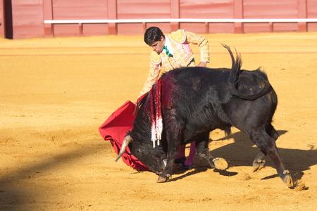 """corrida de toros: Sevilla - 16 de mayo: torero español está llevando a cabo una corrida de toros en la plaza de toros el 16 de mayo de 2010 en Sevilla, España. """"Corrida"""" taurino de los toros, tradición española, donde un torero torero lucha un toro."""