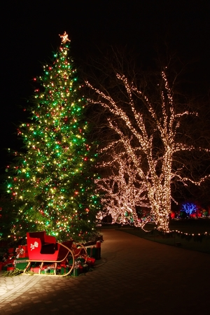 no snow: Christmas Eve in  Butchart Gardens