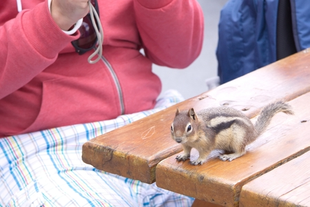 waiting posture: Chipmunk
