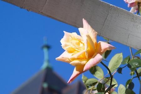 ローズ ガーデン、ビクトリア、bc 州、カナダで 写真素材