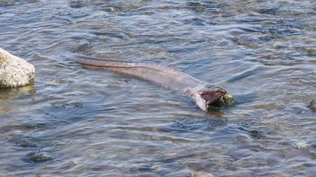 big slick: Sea Monster