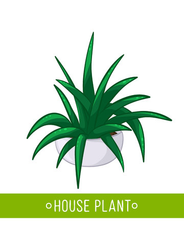 home office interior: Vector illustration of house plant in pot on white background Illustration