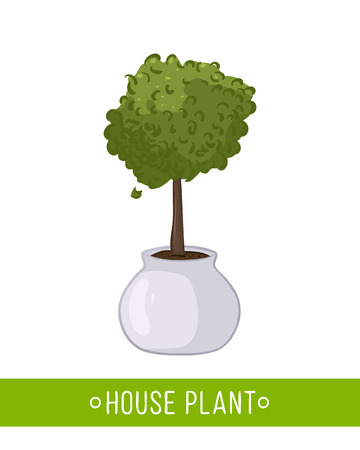 Vector illustration of house plant in pot on white background Illustration
