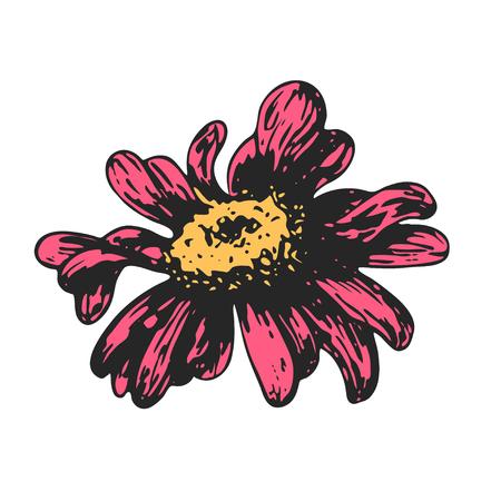 Color sketch of a chamomile on a white background. Vector flower illustration , isolated floral elements, hand drawn botanical illustration, ink pattern. Medicine herbs. Illustration