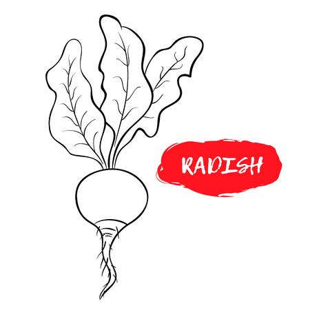 Black and white illustration of a radish.