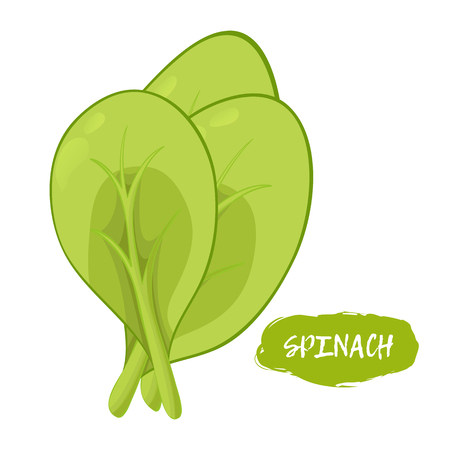 Green illustration of spinach on a white background