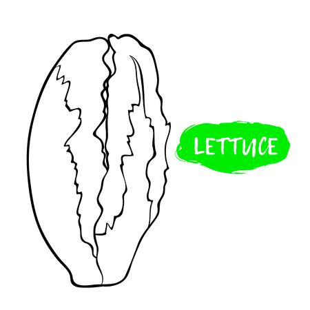 Black and white illustration of lettuce. Stock Illustratie