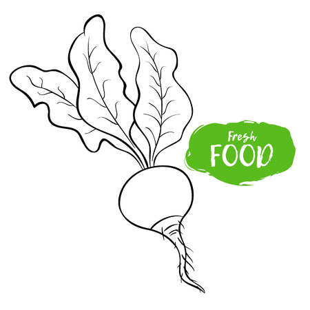 Vector illustration of a radish. Sketch, outline. Coloring on the topic of vegetables. Fresh food