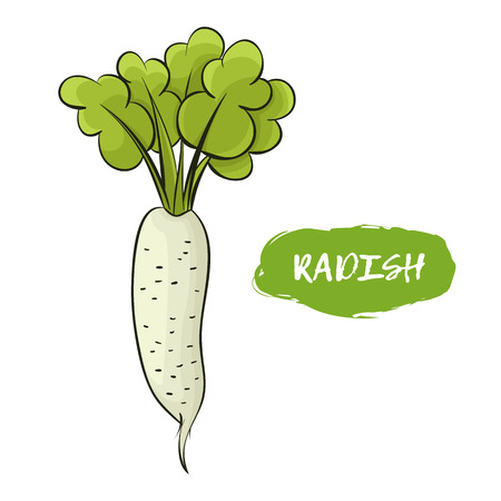 Green illustration of a radish on a white background