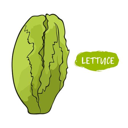 Green illustration of lettuce on a white background