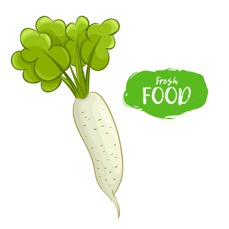 Vector illustration of a radish. Sketch, color. Vivid picture of a vegetable. Fresh food