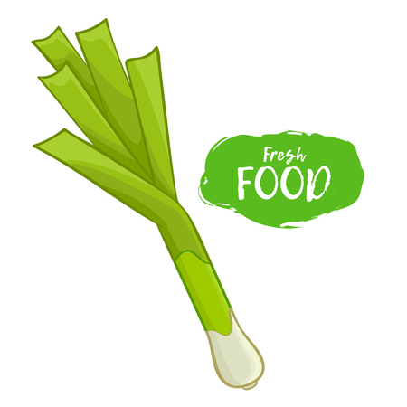 Colored illustration of a leek on a white background