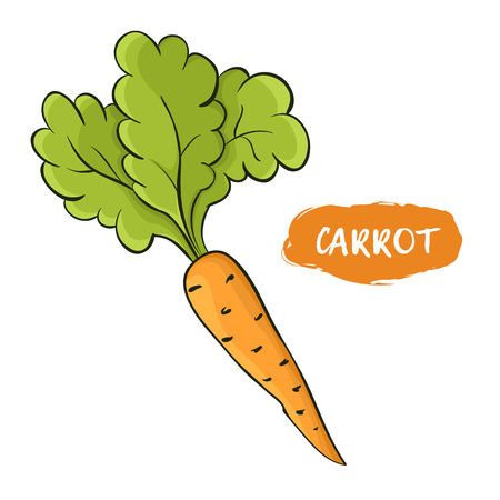 Colored illustration of an orange carrot.