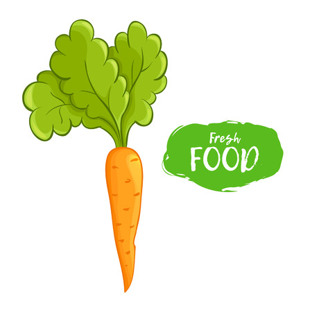 Vector illustration of orange carrot. Sketch, color. Vivid picture of a vegetable. Fresh food
